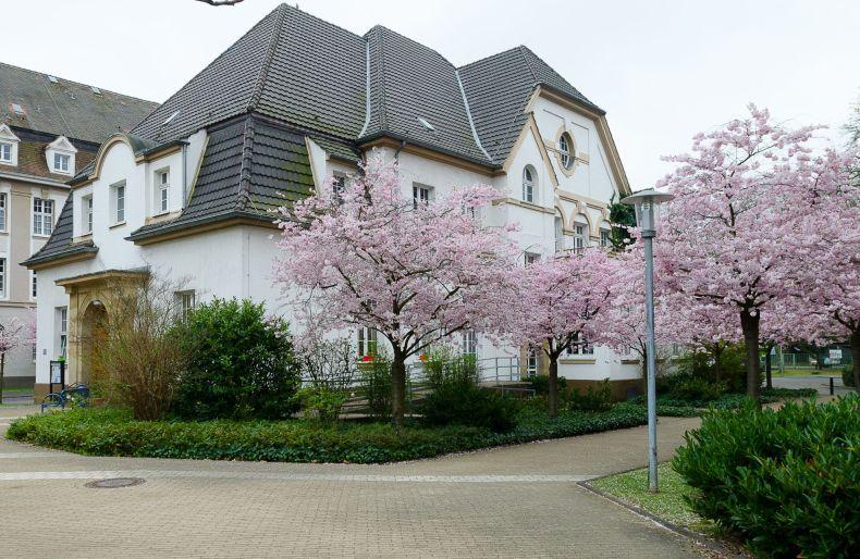 Das Gebäudes des Riehler Treff mit blühenden japanischen Kirschbäumen im Vordergrund.